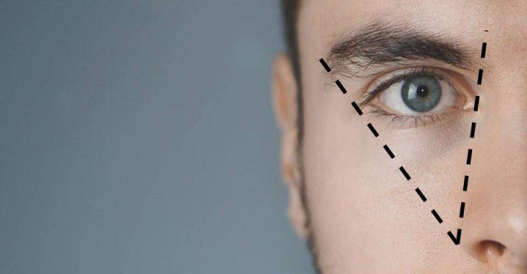 eyebrow proportions